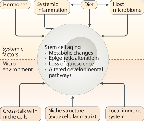 stem_cell_review_crop